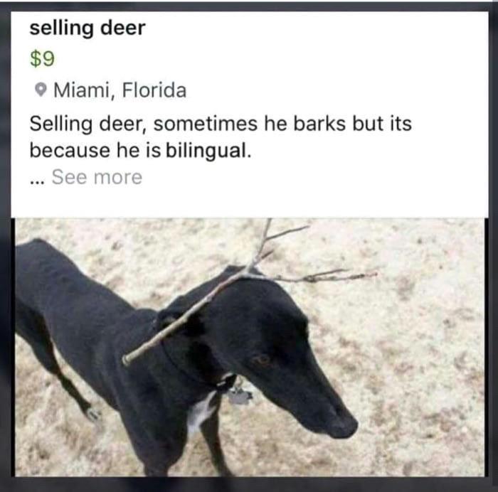 fl_deer-png.347192