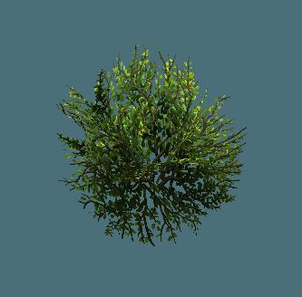 shrub01.png