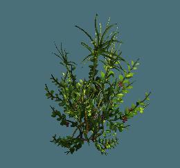 shrub02.png