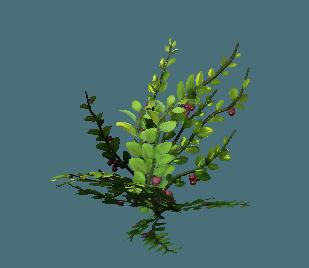 shrub05.png