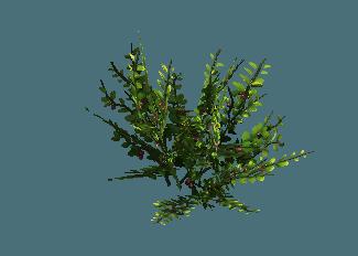 shrub07.png