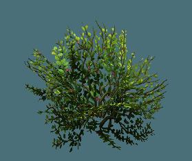 shrub10.png