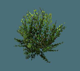 shrub11.png