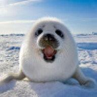 Evil seal