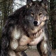 Surreal Wolf
